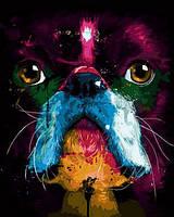 Картины по номерам 40×50 см. Собака Художник Патрис Мурчиано