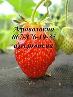Агроволокно Агротекс 60 г/м² (1,6м*10м) черное мульчирующее