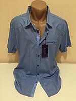 Мужские турецкие рубашки Амато больших размеров