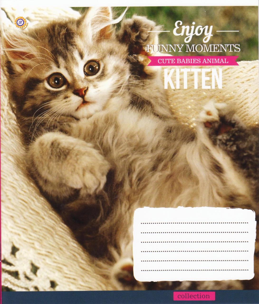 """Тетради школьные 24 листа линия """"Kitten Funny Moments"""""""