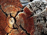 Фотофон виниловый, Срез дерева