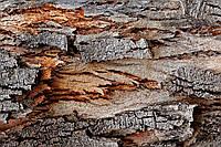 Фотофон виниловый, Кора дерева