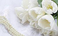 Фотофон виниловый, Белые тюльпаны