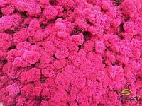 Стабилизированный мох оптом для фитостен fuchisa, фото 2