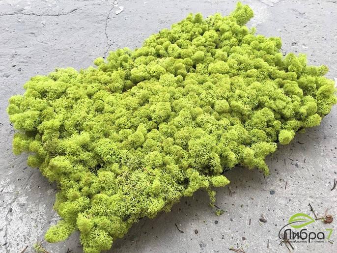 Стабилизированный мох оптом для фитостен  lime green