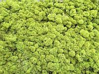 Стабилизированный мох оптом для фитостен  lime green от 4кг, фото 2