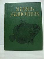 Жизнь животных. В 7 томах. Том 3. Членистоногие. Трилобиты, хелицеровые, трахейнодыщащие. Онихофоры