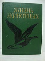 Жизнь животных в 7 томах. Том 6. Птицы