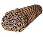 Бамбуковый ствол, опора, д.1,6 см +/-, длина 1,50 м, фото 4
