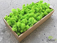 Стабилизированный мох зеленое яблоко