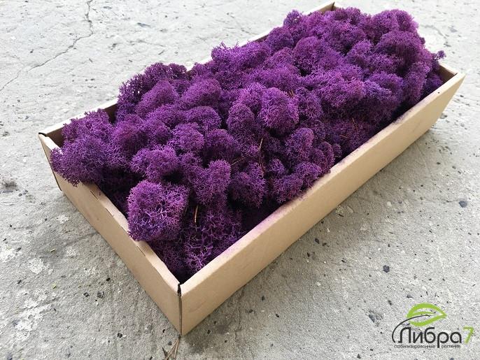 Мох стабилизированный ягель для фитостен Фиолетовый