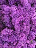Мох стабилизированный ягель для фитостен Фиолетовый, фото 2