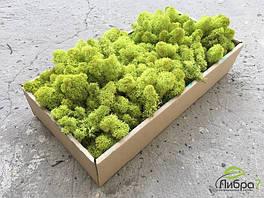 Cтабилизированный мох ягель для фитостен lime green