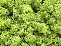 Cтабилизированный мох ягель для фитостен lime green, фото 2