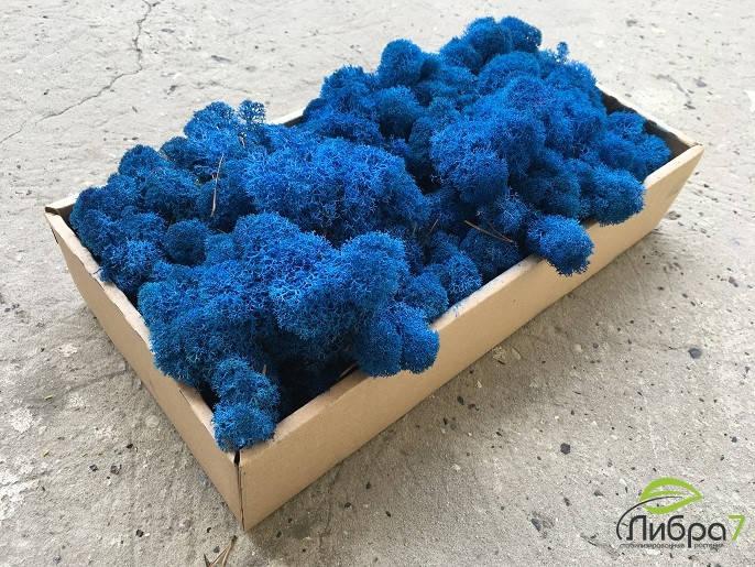 Мох стабилизированный ягель для фитостен синий