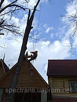 Спил деревьев Киев. Промышленный альпинизм.