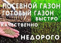 Посев газоной трави