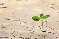 Урожай овощей в странах ЕС под угрозой из-за засухи