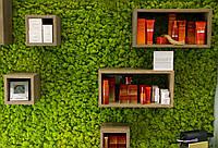 Витринистика из растений, цветов и стабилизированного мха