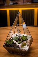 Флорариум Piramida Цветочный террариум флорариум кашпо для растений суккуленты лофт вазы