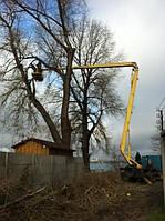 Обрезка веток на дереве. Обрезание, кронирование ветвей.