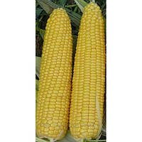 "Добрыня F1 - кукуруза сахарная, 50 сем, Lark Seeds (Ларк Сидс), США - Фасовка ""Фермер Центр"""