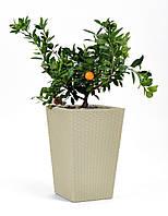 Плетеный цветник Keter Planter (26,3 литра)