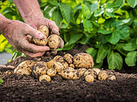Механизация при выращивании картофеля. Обзор используемого навесного оборудования для мотоблока.