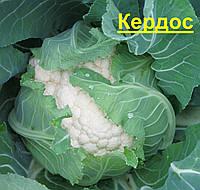 Семена цветной капусты Кердос F1  упак. 1000 нас / сем (акция)