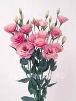 """Лизиантус или эустома россада сорт """"Матадор"""" (5 штук,махровая, розовая)"""