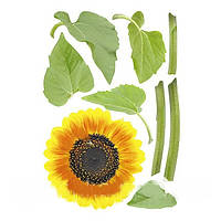 Наклейка, подсолнух, растения,  интерьерная Наш Декупаж