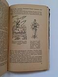 """А.Светов """"От старта до финиша"""". Физкультура и спорт. 1956 год, фото 6"""