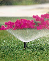Полив растений. Самое подходящее время полива, системы и способы полива!