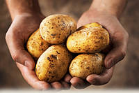 Приложение для прогноза урожая картофеля