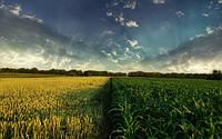 Китайское правительство стимулирует отказ от выращивания кукурузы
