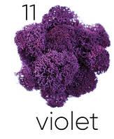Стабилизированный мох. Цвет Artis Violet 11