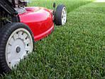Как ухаживать за газоном?