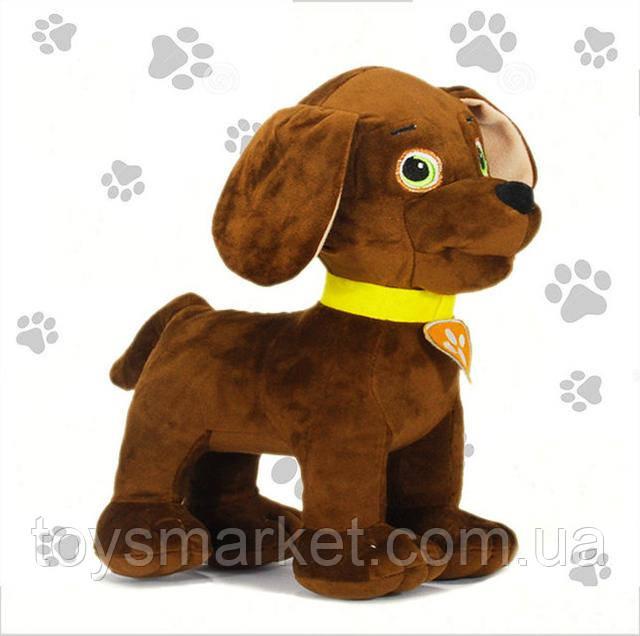 собака Зума