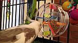 Іграшка-Годівниця для папуги (Лабіринт), фото 7