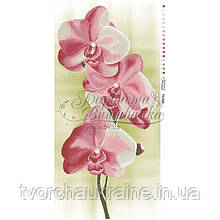 Бисерная заготовка для вышивки схемы-картины Нежные Орхидеи
