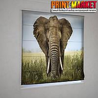 Римские фотошторы слон
