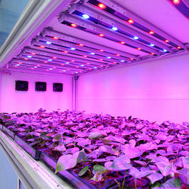 Фито LED освещение