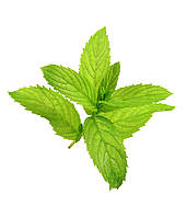 Ароматизатор Peppermint Flavor (Перечная мята), TPA/TFA ТПА, USA