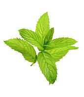 Ароматизатор Peppermint Flavor (Перечная мята), TPA/TFA ТПА, USA 10 мл