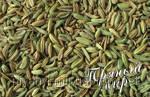 Специя семена фенхеля