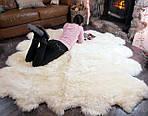 Целебное воздействие овечьей шерсти на здоровье человека