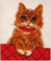 Схема для вышивки бисером Т-0822 Котик Персик