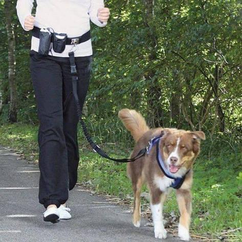 Комплект для бега с собакой TRIXIE, фото 2