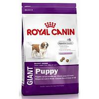 Royal Canin Puppy Giant (Роял канин), корм для щенков крупных пород, 15кг