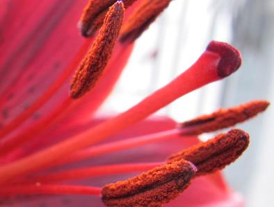 Влияние красного и инфракрасного света на цветение растений.